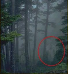 Pics of real ghosts? Some you will have to look close to see the ghost. Images Terrifiantes, Ghost Images, Ghost Pictures, Creepy Pictures, Ghost Pics, Creepy Ghost, Spooky Scary, Spooky Places, Haunted Places