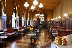 Café Sperl might just be the most typical coffeehouse in Vienna – plus one of the few old-school ones that is not filled with smoke or run-down. Description from cookiesound.com. I searched for this on bing.com/images