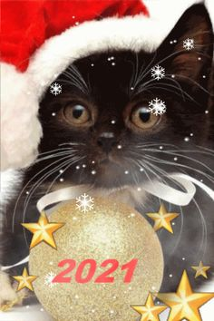 Happy New Year Gif, Happy New Year Images, Happy New Year Greetings, Christmas Humor, Christmas Cards, Dog Grooming Styles, Merry Christmas Pictures, Animated Emoticons, Happy Birthday Messages