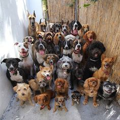Pack of dogs.....all sitting....goooood dogs. Treats all around.