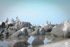 alltroncones alltroncones alltroncones alltroncones #Troncones #Ixtapa #Zihuatanejo #Guerrero #Mexico #playa #vacaciones #alltroncones #surf #surfers #Photography #nature #ocean #playatroncones #tronconesbeach #Tours #ecoturism #ecoturismo #beachtours #surflessons #turtle #turtlerelease #holidays #birds #birdswatching #birdsphoto