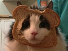 Cat Toast- I'm not sure why I find this so hilarious! lol