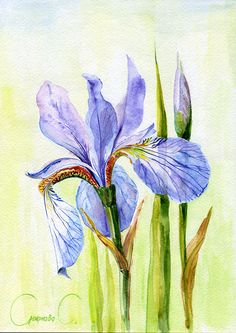 Iris, Flowers, Watercolor Original Painting from the Artist #Realism