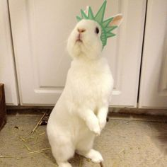 Give me your tired, your poor, your huddled masses needing hugs and cuddles!