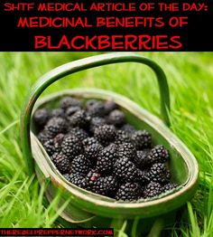 SHTF Medical Article of the Day: Medicinal Benefits of Blackberries