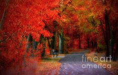 Crimson Shades Of Autumn