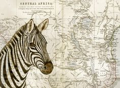 ARTFINDER: Burchell's Zebra by Jane Wilson - This is a Limited Edition artwork from an original watercolour painting that was painted on a vintage map dating from circa 1881. It was painted for an exhib...