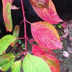 Niets meer aan doen wat mooi. #autumnleaves #autumn #autumncolors #nat #nature by marijke_van_kampen