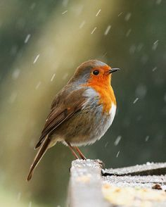 Robin in Snow | Flickr - Photo Sharing!