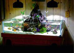Nice! I'd do freshwater with red-eared sliders, neon tetras, platies, cories, etc.