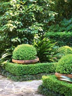 Pots of topiarised buxus are the perfect hiding places for Easter eggs.