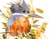 Belted Kingfisher Painitng, original watercolor painring, 12 X 9 in, birds colors, Gray orange brown olive green