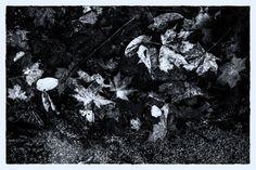 Klagenfurt, Shades Of Grey, Black And White, Black N White, Shades Of Gray Color, Black White