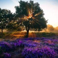 Προσευχή Αγίου Κυπριανού - Διαλύουσα τα Μάγια - ΕΚΚΛΗΣΙΑ ONLINE Free To Use Images, Vineyard, Country Roads, Celestial, Sunset, Plants, Outdoor, Paisajes, Outdoors