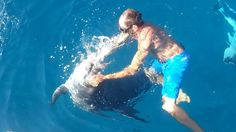 I delfini ‹abitano› a Golfo Aranci. Con le barche ‹Marco del mare› lo spettacolo è a portata di tutti.  * VIDEO *