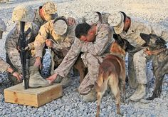 Marine dog handlers mourning the loss of a fellow handler--due to the specialized nature of their jobs, dog handlers are a close-knit fraternity within the military.