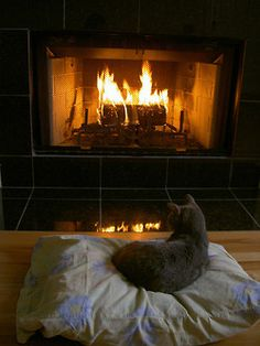 47 Best Hearth Cats Images On Pinterest Doggies Cut
