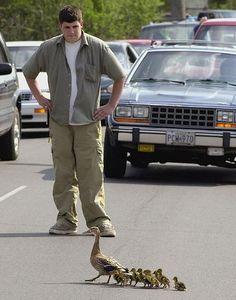 Let the little ducks pass! :)