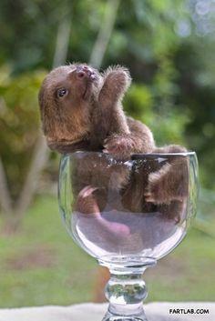 Goblet of Sloth, @Sarah Wilson