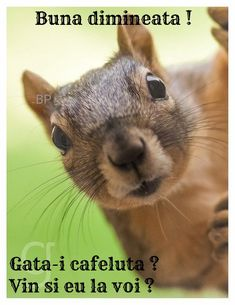 Good Night Quotes, Go To Sleep, Bedtime, Squirrel, Memes, Animals, Animales, Squirrels, Animaux