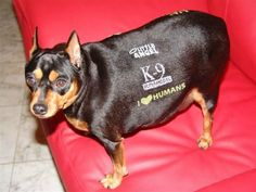 We feel badly for any dog owner who thinks these tattoos are a good idea. http://www.ivillage.com/weird-pet-products/7-a-534326