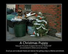 A Christmas Puppy-not my baby girl. She is my Christmas puppy, but is here for the rest of her life. Christmas Puppy, Christmas Gifts, Christmas Decor, Christmas Tree, Fight The Good Fight, Getting A Puppy, All You Can, Animal Welfare, Animal Quotes