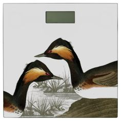 Audubon Grebe Birds Animal Wildlife Bathroom Scale - animal gift ideas animals and pets diy customize