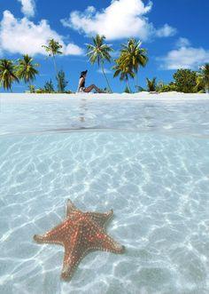 Starfish Point, Cayman Island Seven Mile Beach