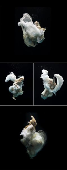 Beautiful underwater photography taking away your breath for the pleasure of your eyes. By Mark Tipple,