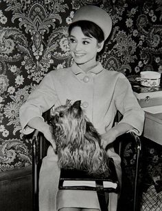 The actress Audrey Hepburn photographed with Assam of Assam (her Yorkshire Terrier) by Hamilton Millard in her dressing room at the Studios de Boulogne, located on Avenue Jean-Baptiste-Clément, in Boulogne-Billancourt, a French commune in the... #yorkshireterrier