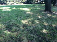 Sunshine filtering through foliage 26/06/2012 JPN