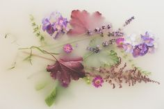 Man Vs Nature, Botanical Fashion, Milk Bath Photography, Colouring Pics, Outdoor Photos, Water Flowers, Maternity Photography, Photo Studio, Aesthetic Wallpapers