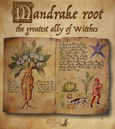 Herb Analysis: Mandrake, the most mystical root of all and the greatest ally of witches - Magical Recipes Online
