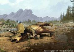 "Dead *Triceratops Artwork by Akeiron on DeviantArt A dead *Triceratops horridus. Triceratops"" Art by Liscianigiochi."