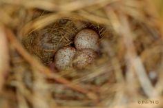 A Bird's Nest Sequence