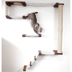 CatastrophiCreations Mod Climb Track Multiple-level Hammock and Climbing Activity Center Handcrafted Wall-mounted Shelves 13 Piece Cat Tree Set. Furniture Scratches, Cat Furniture, Cool Cat Trees, Cool Cats, Cat Tree Plans, Herding Cats, Cat Perch, Cat Hammock, Cat Shelves