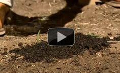 Top Ten Gardening Secrets - Earthworms, A Garden's Best Friend - Off The Grid News