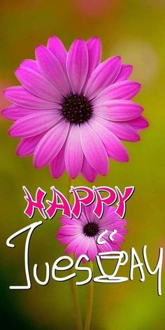 Happy Tuesday Images, Happy Tuesday Morning, Morning Wish, Good Morning Images, Good Morning Quotes, Morning Sayings, Good Day, Good Night, Tuesday Greetings