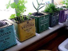 herb garden grown in tea containers