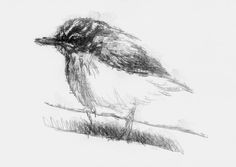 Tree creeper, Artist Sean Briggs producing a sketch a day, prints available at https://www.etsy.com/uk/shop/SketchyLife  ##creeper #art #drawing #http://etsy.me/1rARc0J