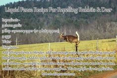 Liquid Fence Recipe For Repelling Rabbits & Deer