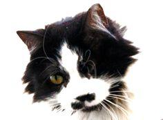 On eyed pirate Tel Aviv Mustache alley cat