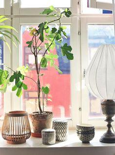 Världens finaste (ekologiska) lampskärmar (plus ett erbjudande till dig)