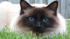 Petition:Justice for Vera.Vera was a cat of 13 who had known only the street. She was killed with blows October 29 in Rivesaltes. Sign to seek justice for the animal, and prison for the perpetrator of this death!