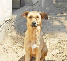 Tierfotografie - der Tierschutz ist wichtig - http://your-foto.de/tierfotografie-der-tierschutz-ist-wichtig/