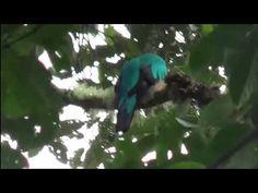 Turismo por las Montañas de Caldas 1 - YouTube Bird, Youtube, Animals, Tourism, Activities, Animales, Animaux, Birds, Animais