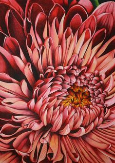 Pink Mum Drawing by Bruce Bley