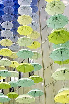 ombrelli, parete, gialli, versi, supermercato, esposizione, vendita, pioggia, ombrella, ombrello