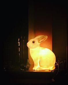 #glowingbunny #bunnylight #penny #bunnygirl #bunnybunny #instabunny #rabbitlove #love #manchester #light #moodlighting 🐇