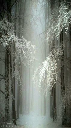 Perfect scenery for The House of Thoth Snow Forest, Hungary Beautiful World, Beautiful Places, Beautiful Pictures, Foto Picture, Picture Movie, Snow Forest, Foggy Forest, Misty Forest, Forest Path